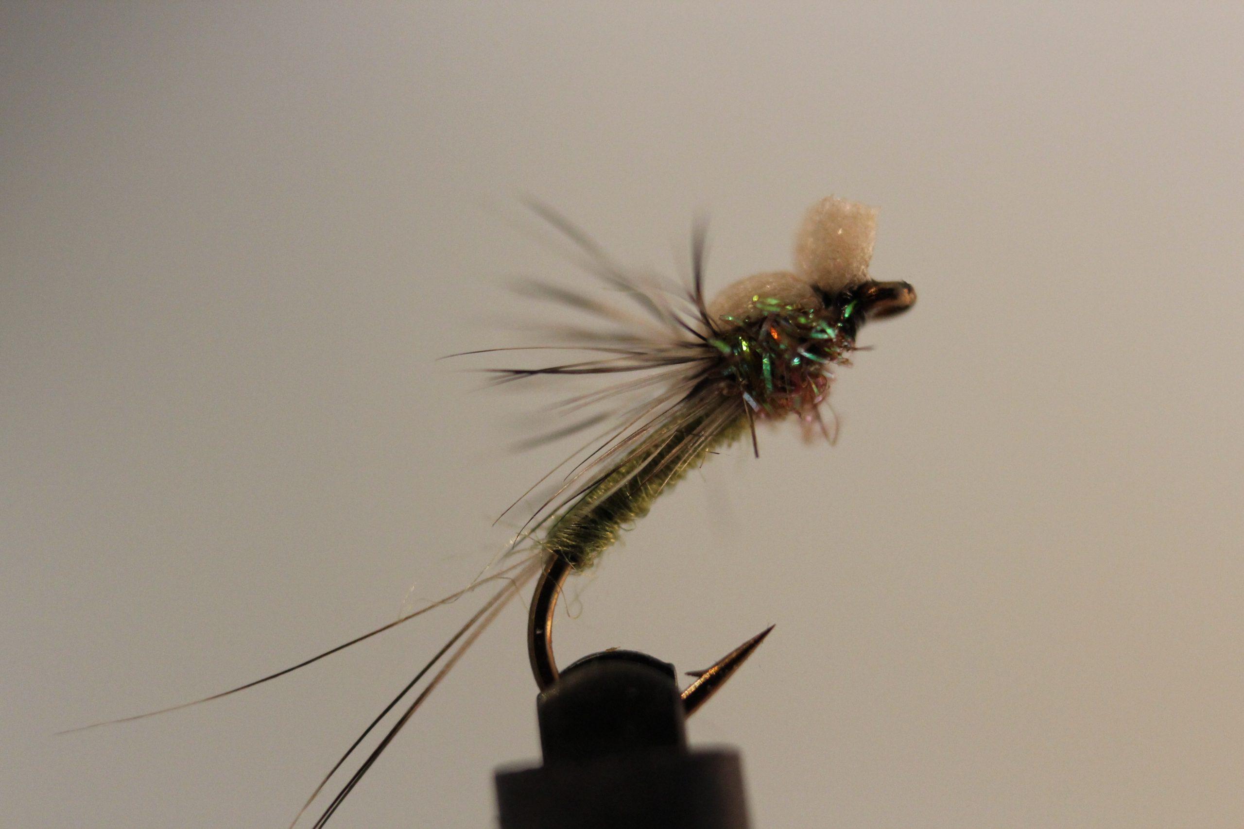 Olive Princeps døgnflueklekker
